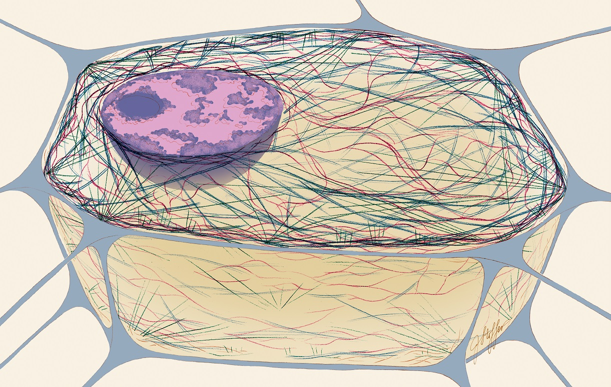 cytoskeleton in action