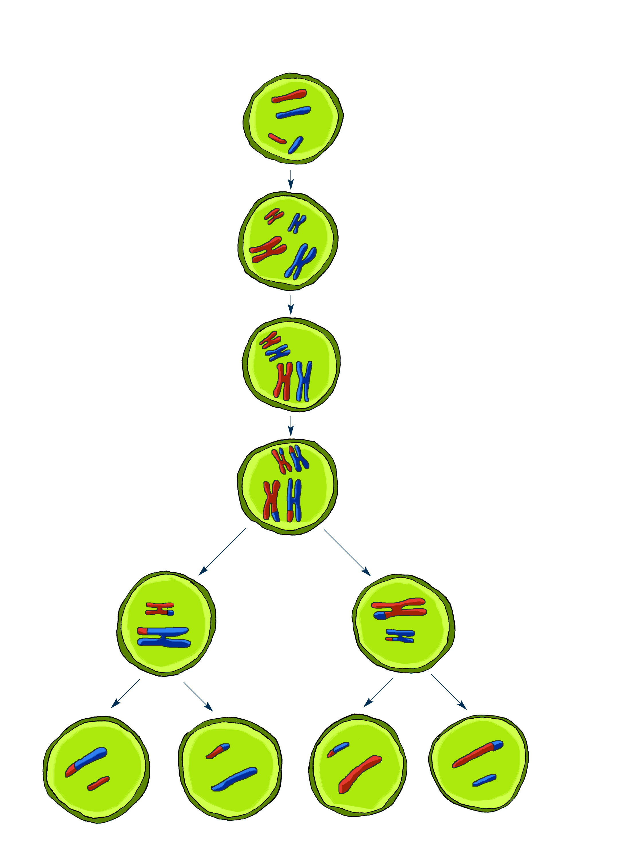 Meiosis For Kids as well Frog Coloring Book Tree Frog Coloring Pages Printable Frogs Tree Frog Coloring Pages Printable Frogs Frog Template Images Pepe The Frog Coloring Book likewise Chemistry Of Life Vocabulary Practice Chapter 2 Answers Chapter 3 The Biosphere Answer Key Nuclear Chemistry Half Life Worksheet Answers furthermore 544231936193221544 in addition 420101471462205152. on life cycle flip book