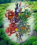 Structure of Glutamate Dehydrogenase