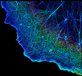 3D image of actin in a cell