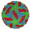 Protective membrane and membrane proteins of the dengue virus visualized with cryo-EM
